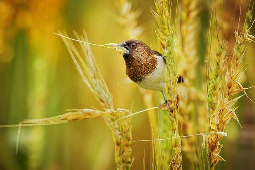 Птицы элеватор длинный высокий транспортер