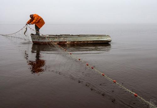 ловля рыбы сетями фото